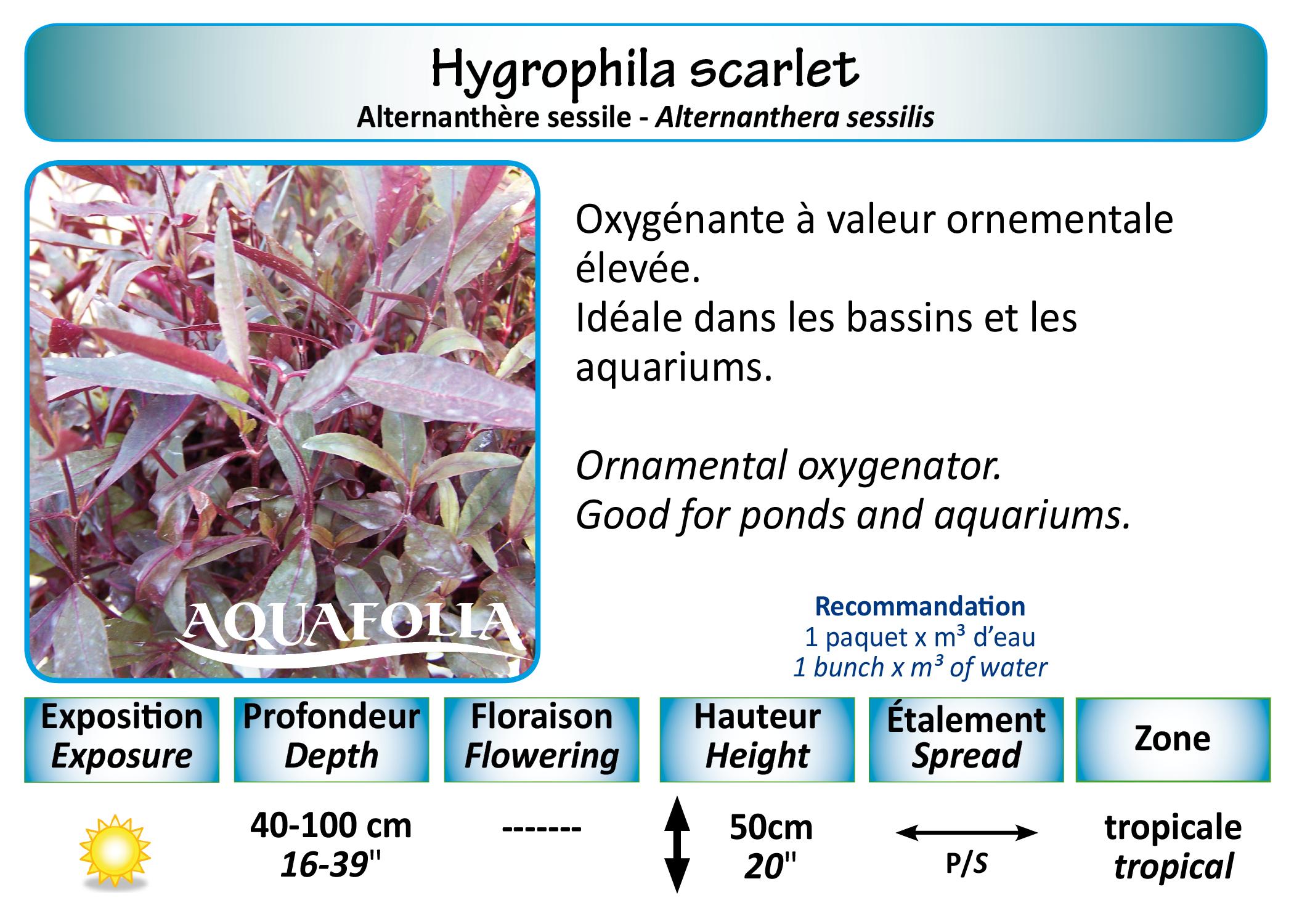 Names Index Ak 47 Exploded Diagram Http Forumnationstatesnet Viewtopicphpf Hygrophila Scarlet 5x7